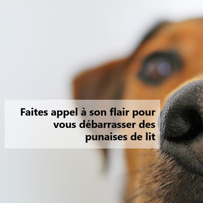 Dogtector - Détection canine des punaises de lit